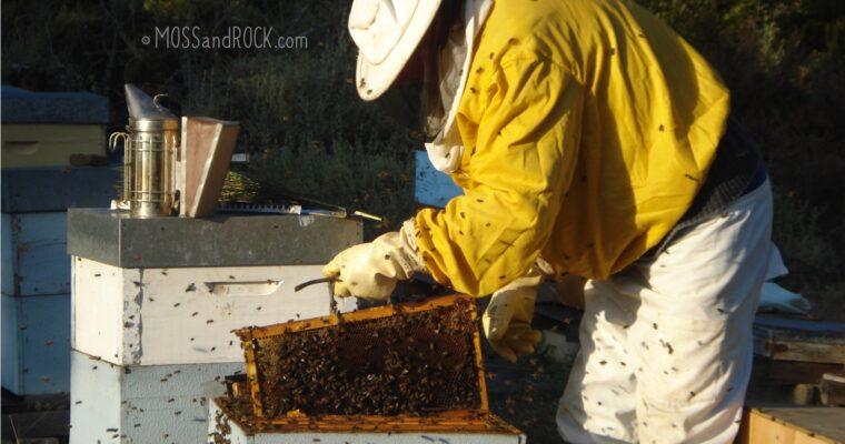 Traditional Honey Harvest